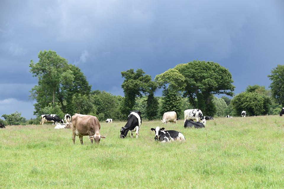 Qu'est ce qui peut aider les agriculteurs et les éleveurs à se tourner vers plus de durabilité ? Qu'est ce qui est fait actuellement et comment améliorer la situation ?