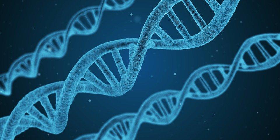 Laboratoire Marquage moléculaire (ADN) – ADNMARK